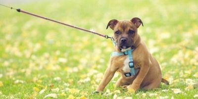 7 Things That Might Irritate Your Dog